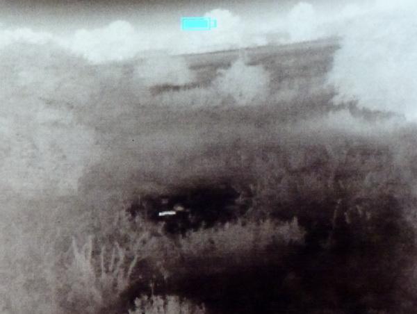 Wärmebildkamera Jagd Marderhund